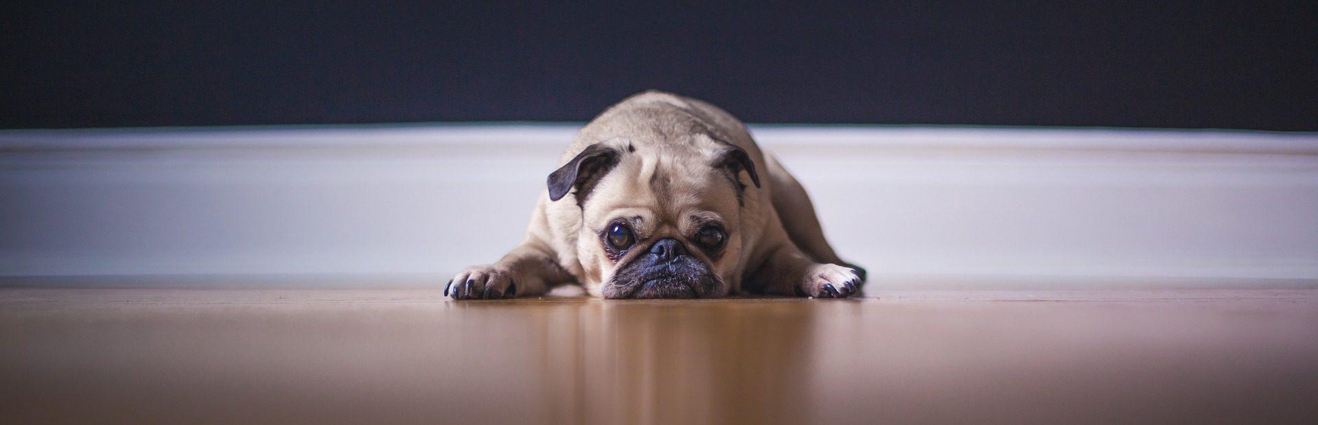 Hundebett Kunstleder Hintergrund II