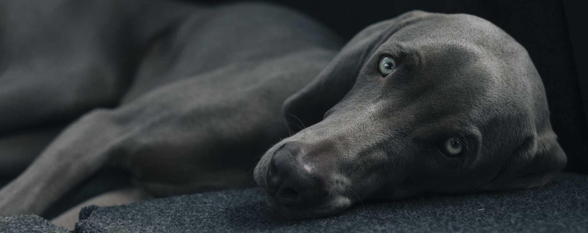 Hundebett Kunstleder Hintergrundbild